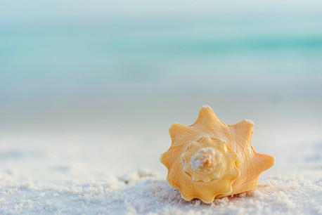 LSR_seashell_web samples-13.jpg