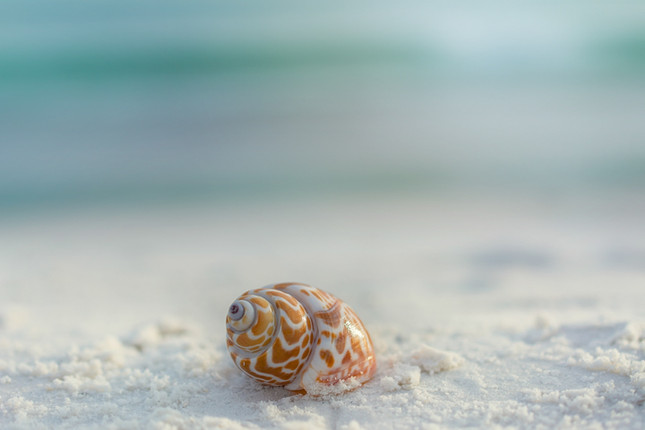 LSR_seashell_web samples-15.jpg