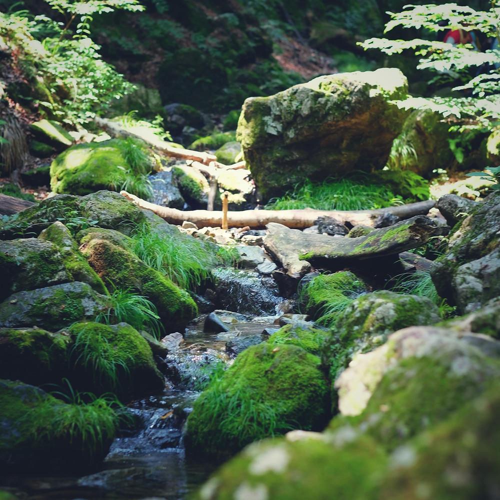 earth trekking 御岳山ロックガーデンの苔が美しい