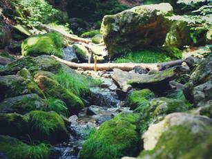 東京・御岳山ロックガーデンが想像以上に自然深くて驚いた