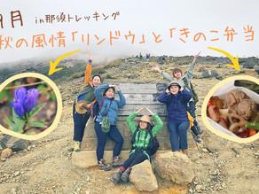 秋の風情「リンドウ」を愛で「きのこ弁当」を食べた9月の那須トレッキング