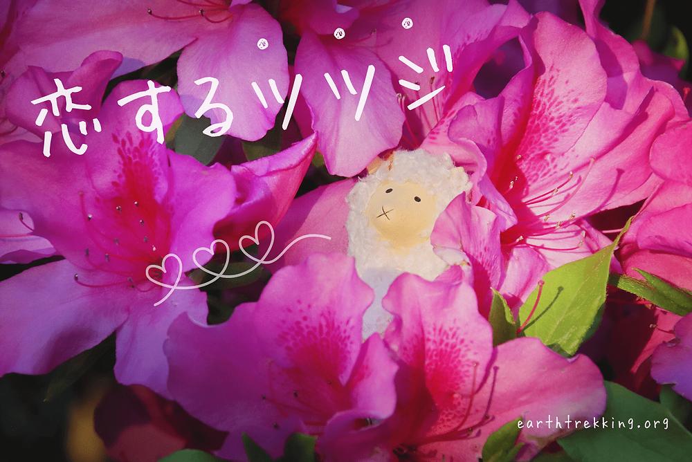 恋するツツジとひつじ・4月〜5月の花・earth trekking