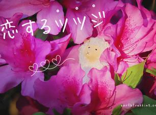 4月は恋する「ツツジ」の季節 〜ピンクに染まる樹木に癒されて〜