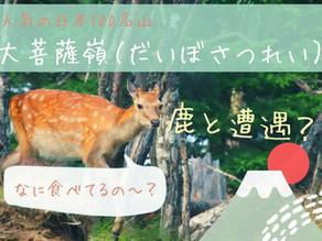 人気の100名山「大菩薩嶺(だいぼさつれい)」で鹿とひょっこり出会ったハイキング