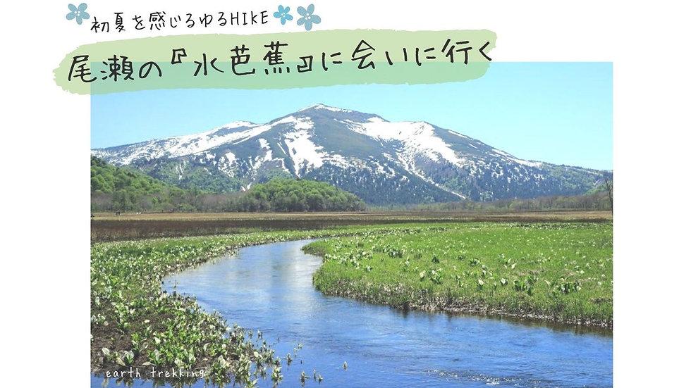 【ゆるHIKE】尾瀬の『水芭蕉』に会いに行こう。花言葉は『美しい思い出』