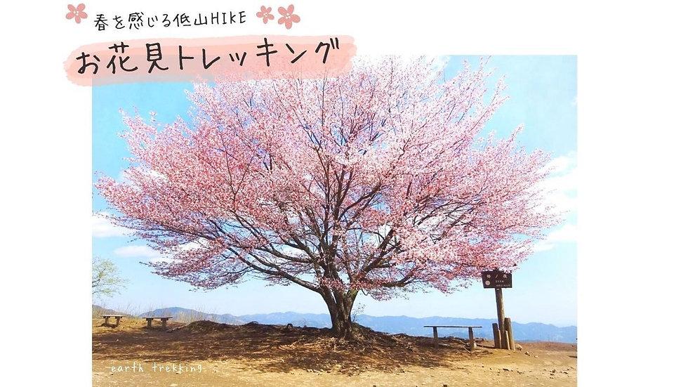 【GW限定】春を感じる『峡谷』と『山頂桜』のお花見トレッキング