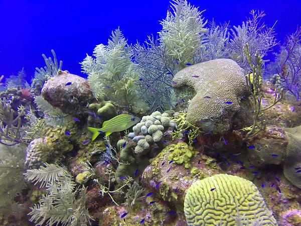 dive still 3.jpg