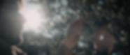 olive_leaf_sun-1.png