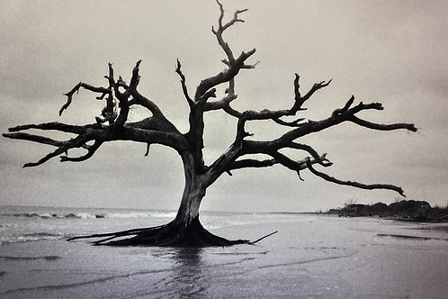 Rooted in Time