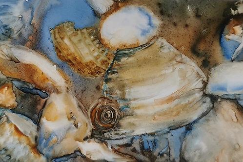 Christy Janes - Beach Find