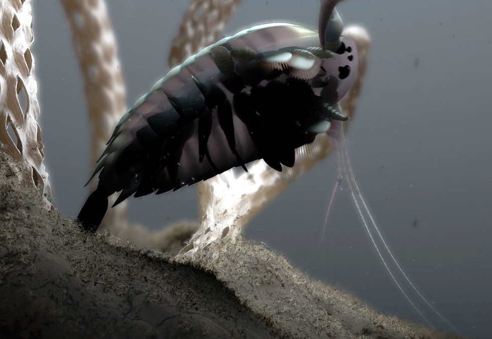 Yawunik - a predator
