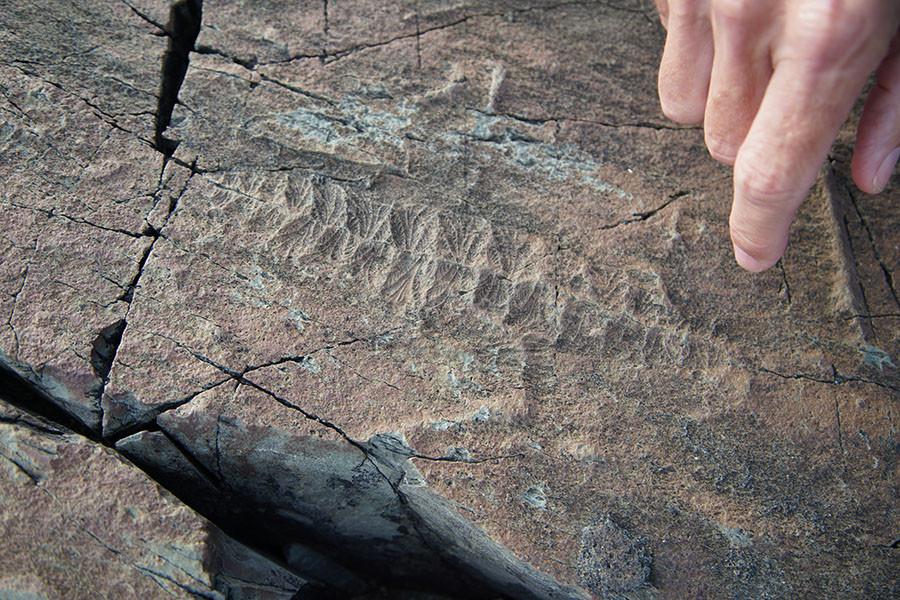 Edicaran fossil - Mistaken Point