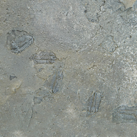 fossil  image for section cover.jpg