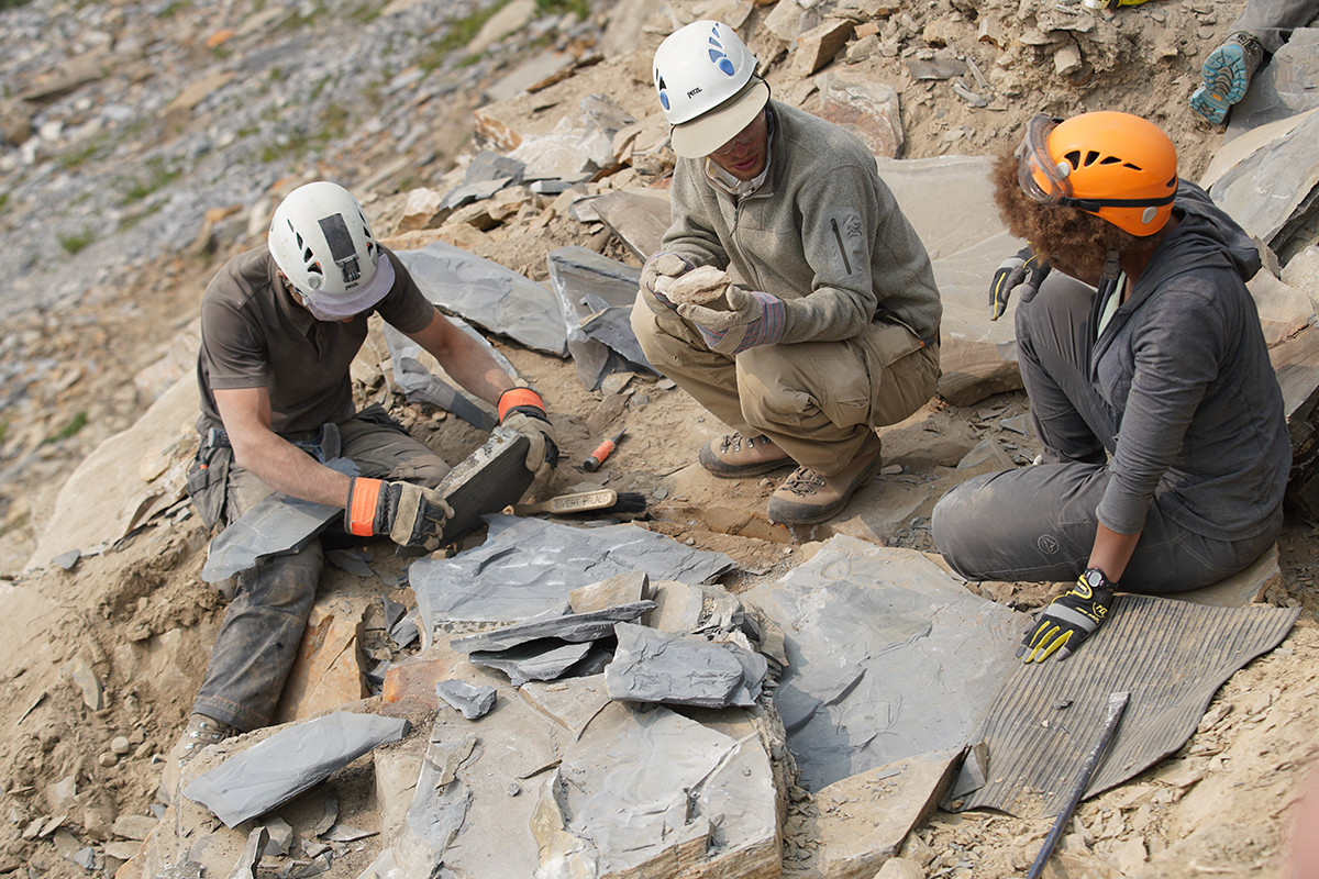 Examining freshly split shale