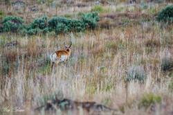 Antelope Island-1