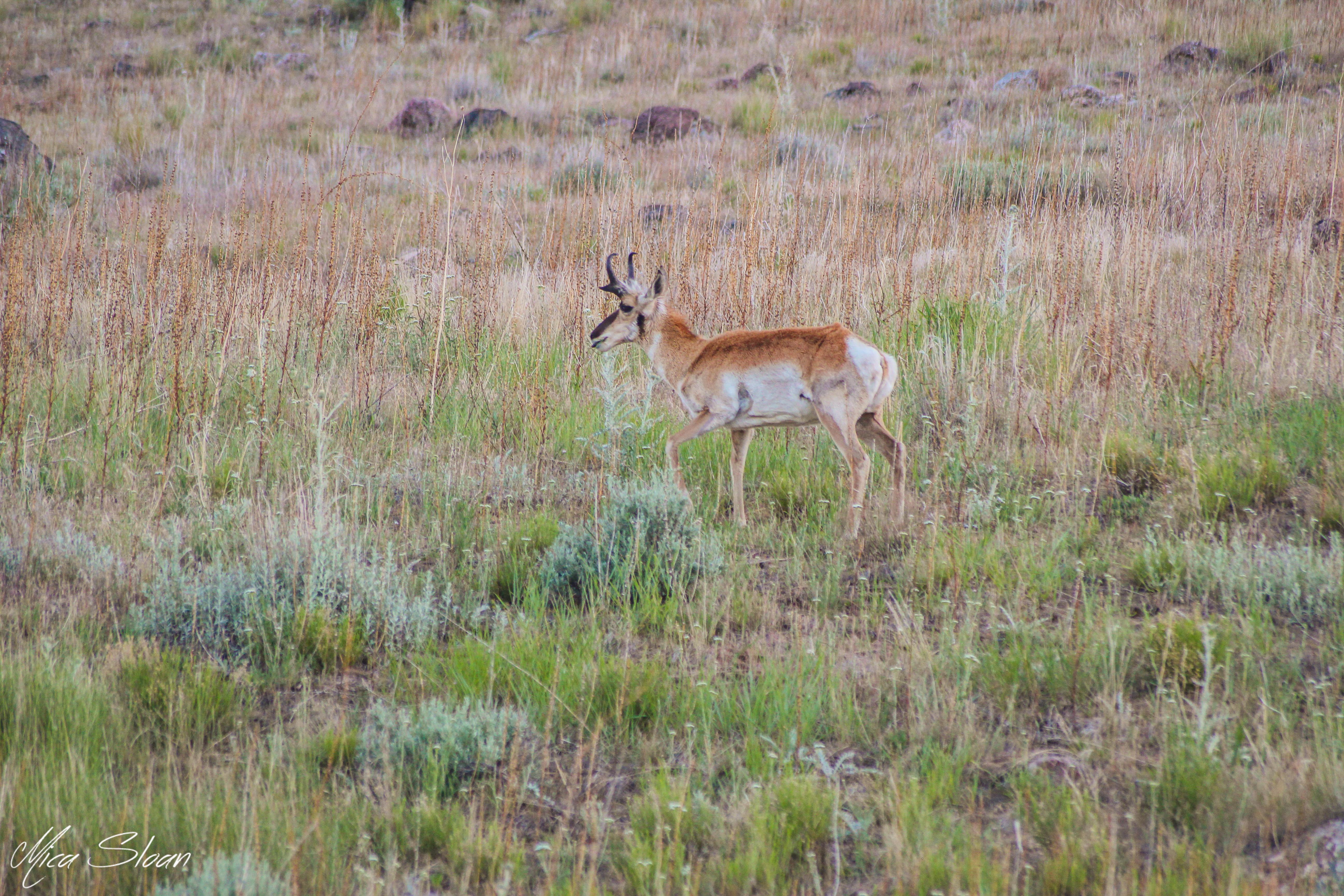 Antelope Island-2