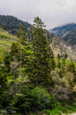 Little Cottonwood-18