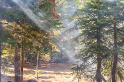 Smoke Through the Trees