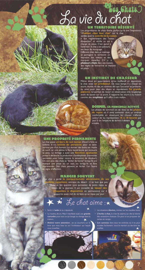 chats-7-exposition.jpg