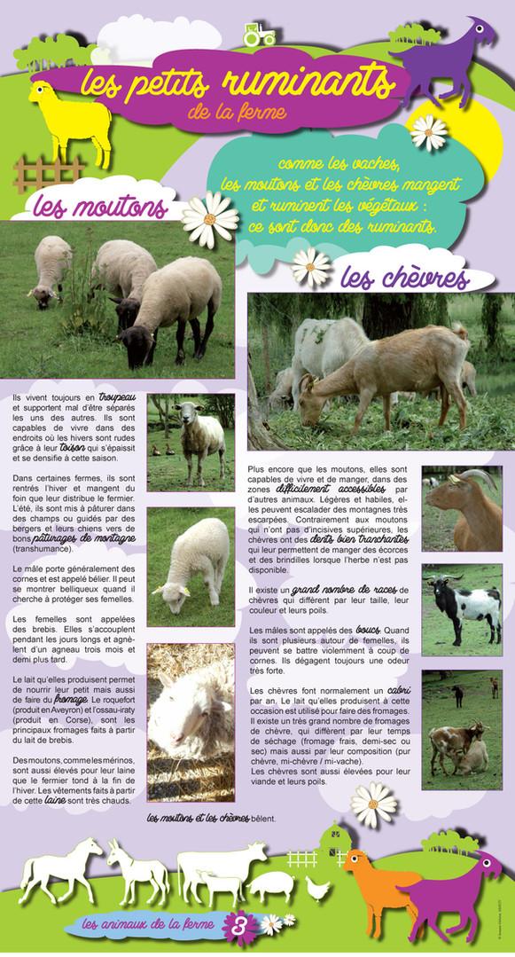 Animaux de la ferme (3).jpg