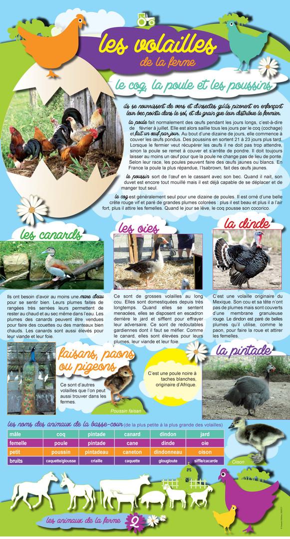 Animaux de la ferme (2).jpg
