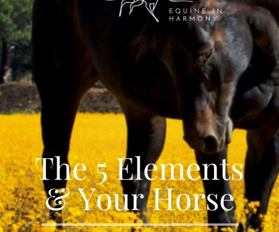 The Five Elements And Your Horse - Part 5 Earth