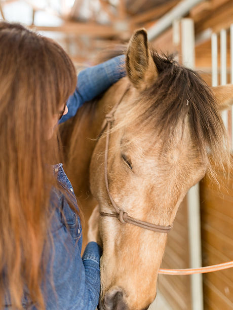 Equine Acupressure- Red Dog Ranch