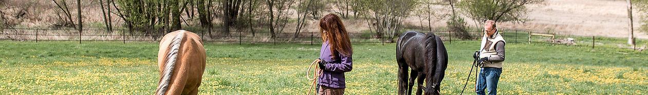 horses in dandelion field.jpg