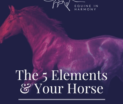 The Five Elements and Your Horse- Part 1 Metal