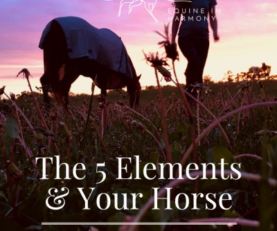 The Five Elements And Your Horse - Part 4 Fire