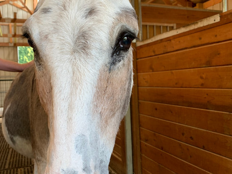A LOVE LETTER TO GUS—the best donkey in the whole wide world