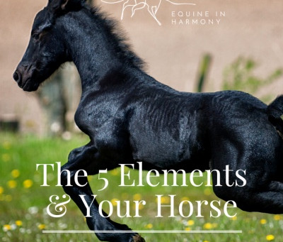 The Five Elements And Your Horse - Part 3 Wood