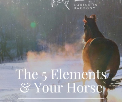 The Five Elements and Your Horse- Part 2 Water