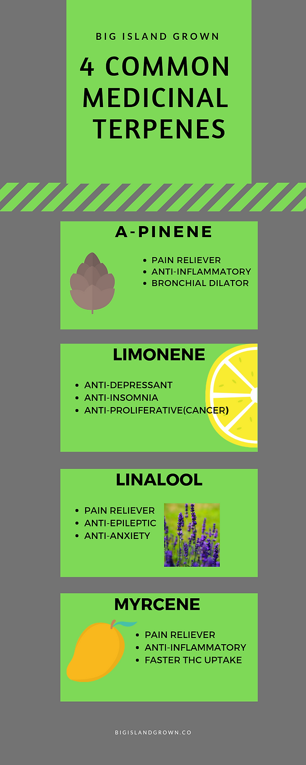 4 common medicinal terpenes (1).png