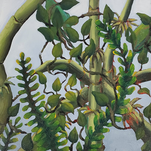 Bamboo, Ferns and Ivy
