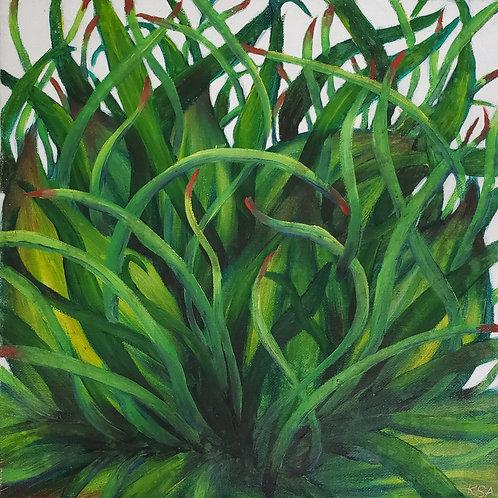 Tropical Plant Life II