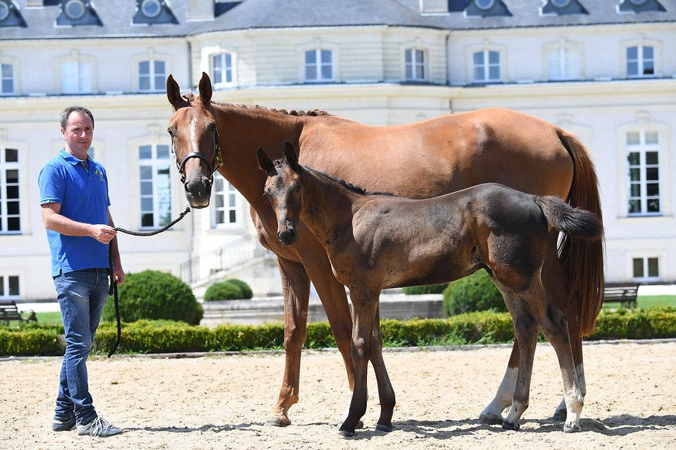 Présentation Foal Elevage du Bodery