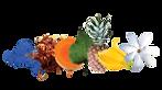Saru-Organik-Monoi-de-Tahiti-Body-Oil-Vucut-Yagi-Umuhei
