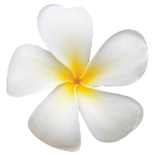 Saru-Organik-Monoi-de-Tahiti-Body-Oil-Vucut-Yagi-Frangipani