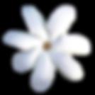 Saru-Organik-Monoi-de-Tahiti-Body-Oil-Vucut-Yagi-Tiare-Cicegi-Flower