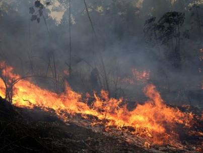 Bolsonaro, az esőerdők és a homofóbia