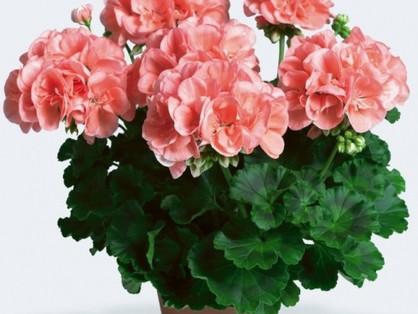 Aki a virágot szereti rossz meleg nem lehet?