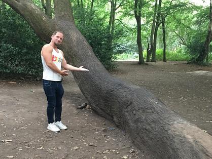 A pucsítófa árnyékában