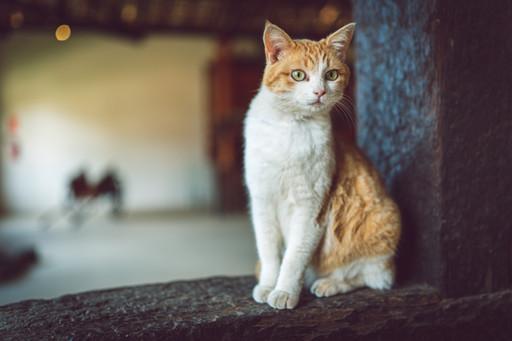 Little Cat 3.jpg