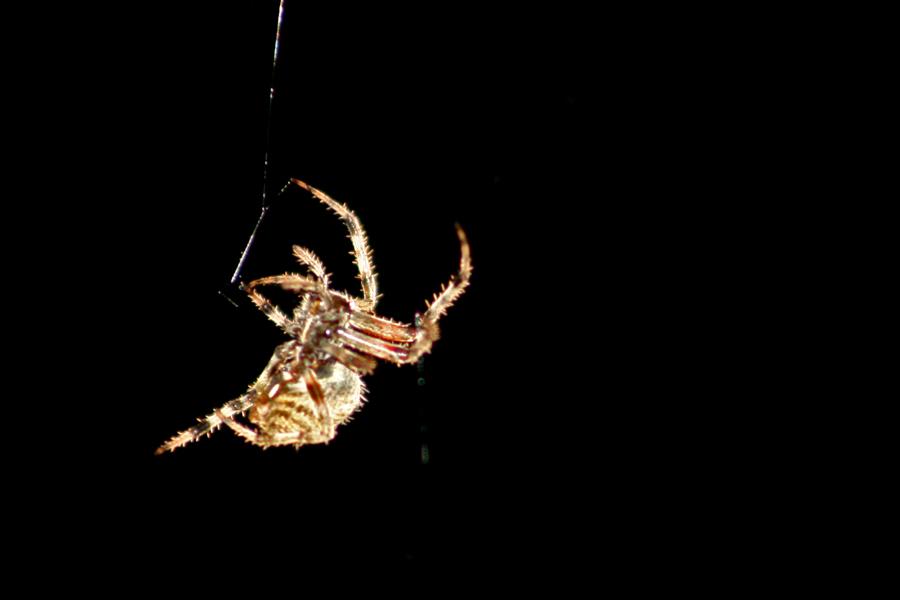 spider6.jpg