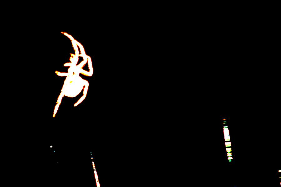 spider7.jpg