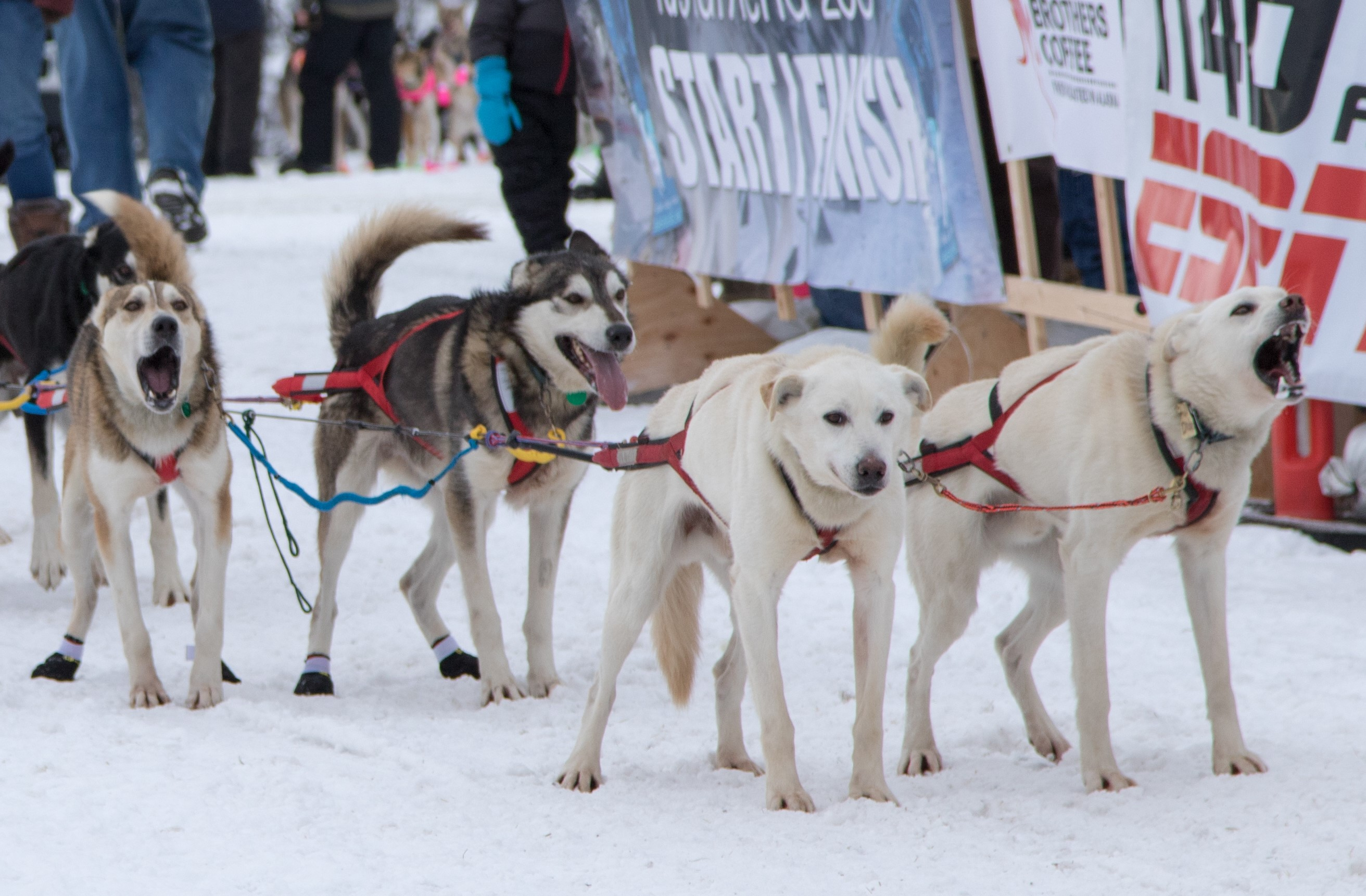 CGL - Sled Dogs