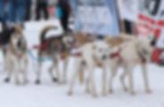 CGL - Sled Dogs.jpg