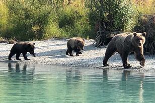 CGL - Bear Viewing.jpg