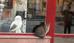 מה הקשר בין חתול לתנשמת